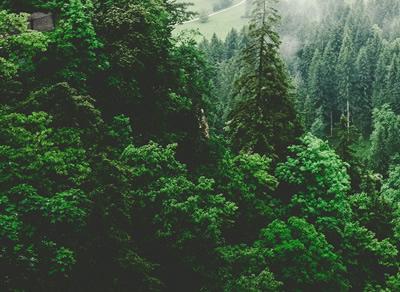 Biodiversität, Arten- und Naturschutz